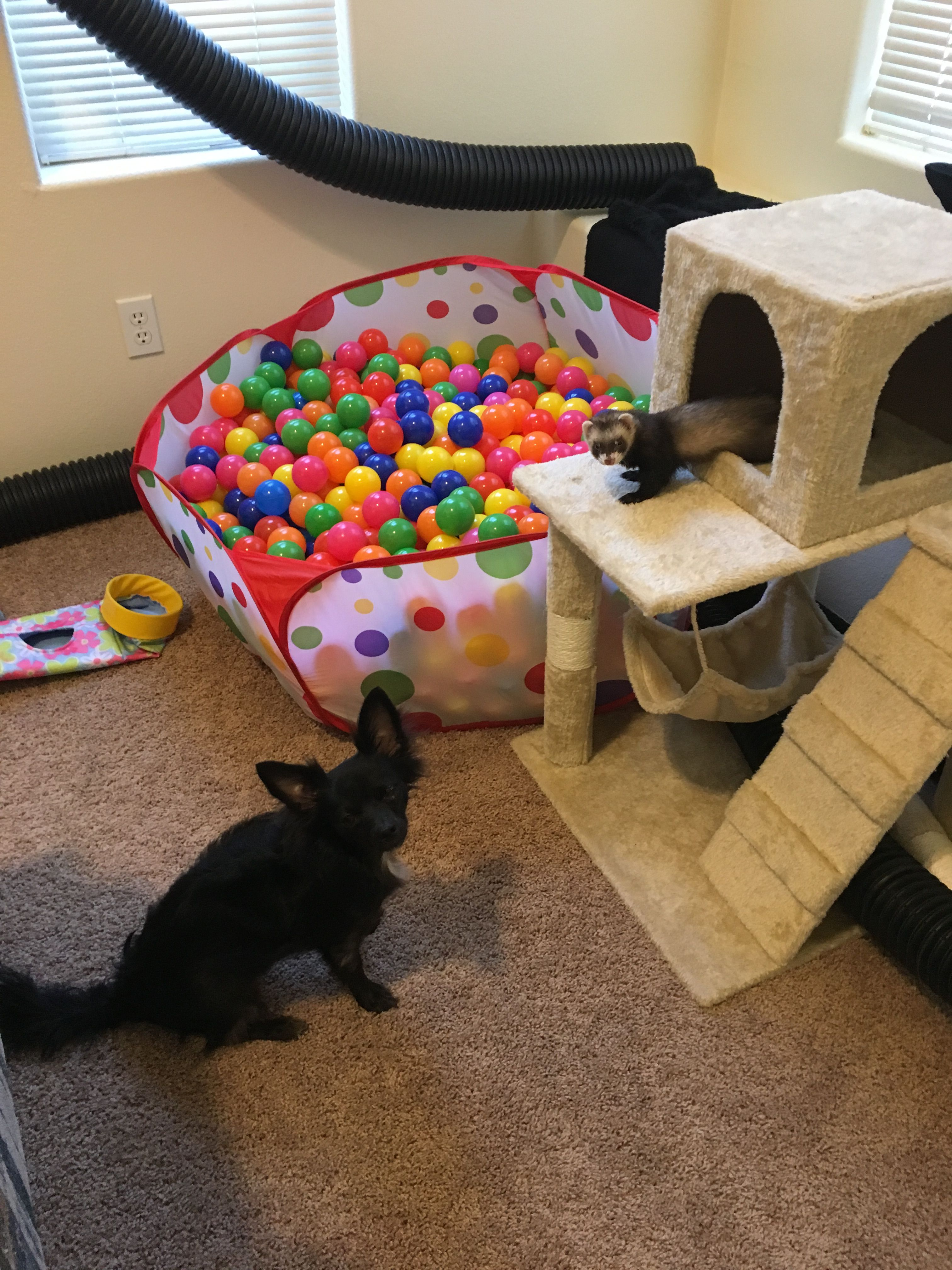 Ferret Playroom With A Ball Pit, Tunnels, And A Cat Condo